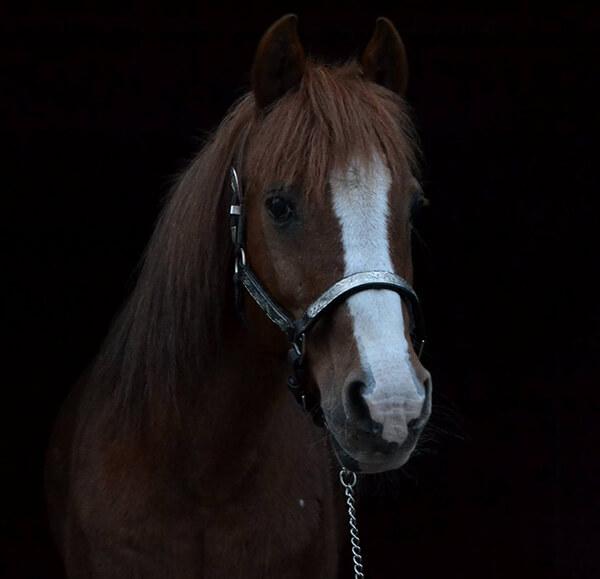 MBDH traning onze paarden - Django