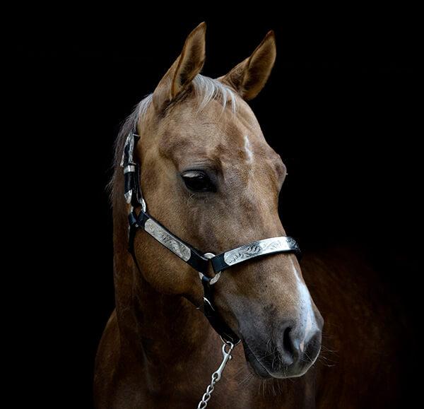 MBDH traning onze paarden - Jessy