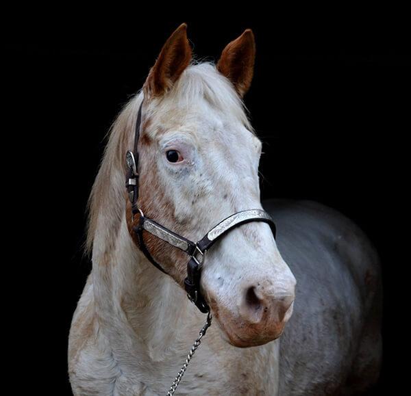 MBDH traning onze paarden - Lesley