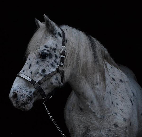 MBDH traning onze paarden - Spike