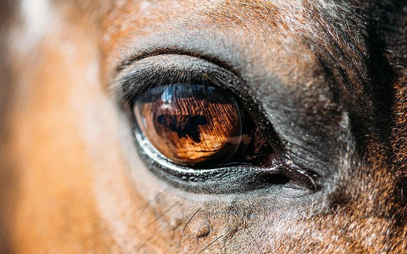Angst voor paarden